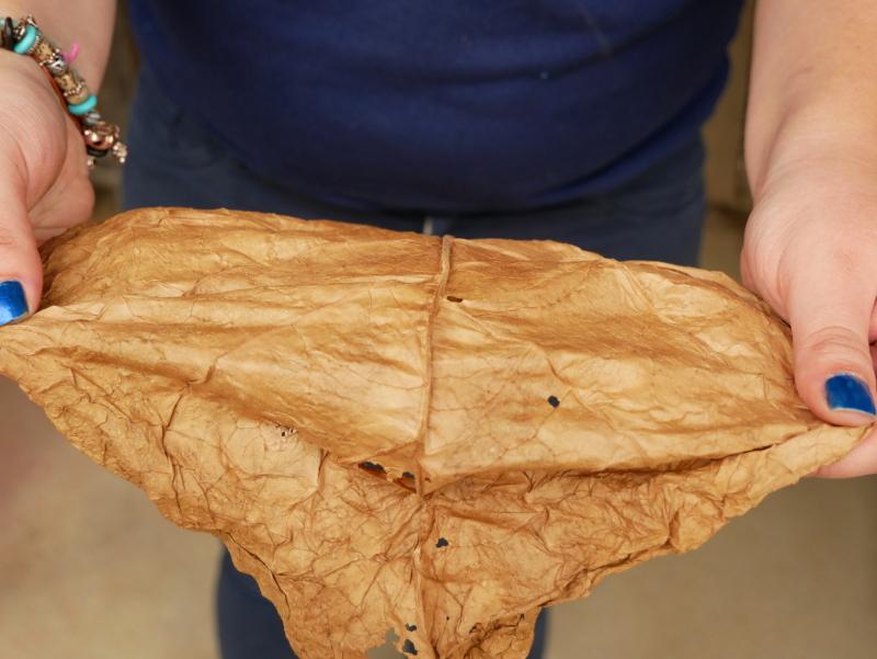 tabak elastizitaet deckblatt freibeuter reisen