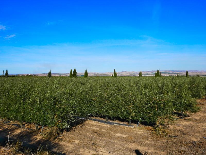 olivenhain navarra