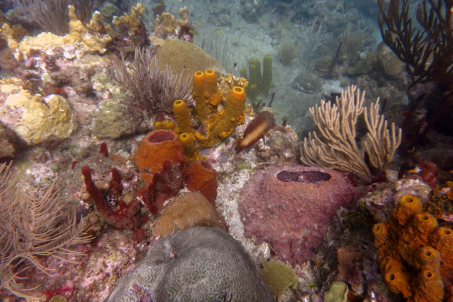 guadeloupe reserve cousteau Tauchen