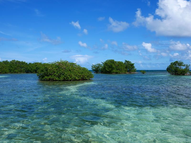 guadeloupe mangroven karibik