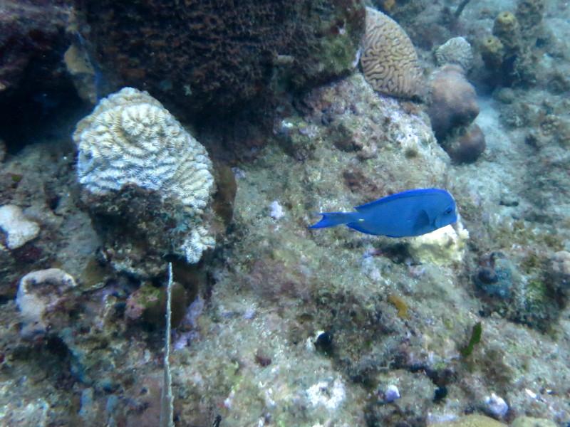 karibik dori tauchen guadeloupe reserve cousteau