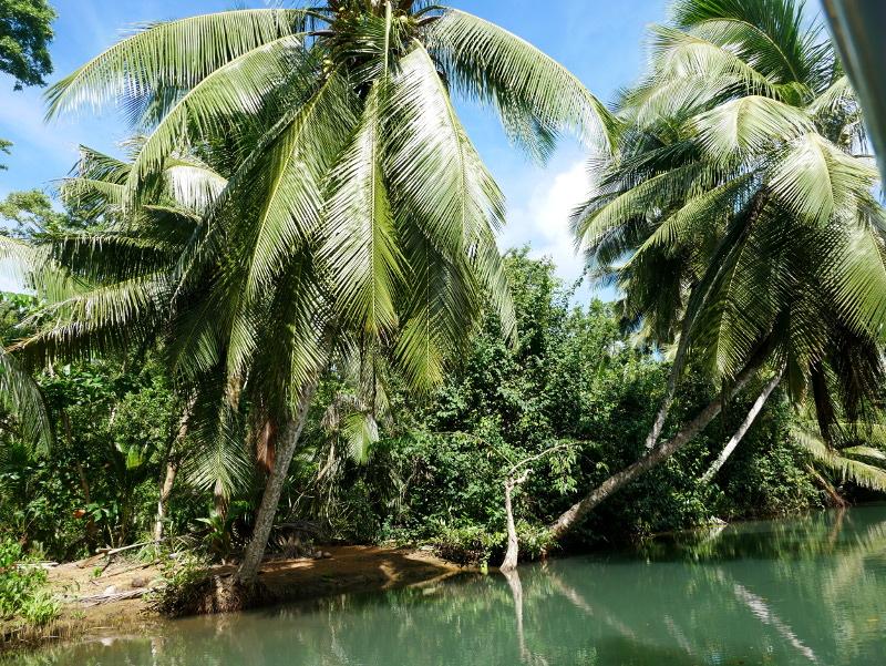 mangroven palmen riviere guadeloupe