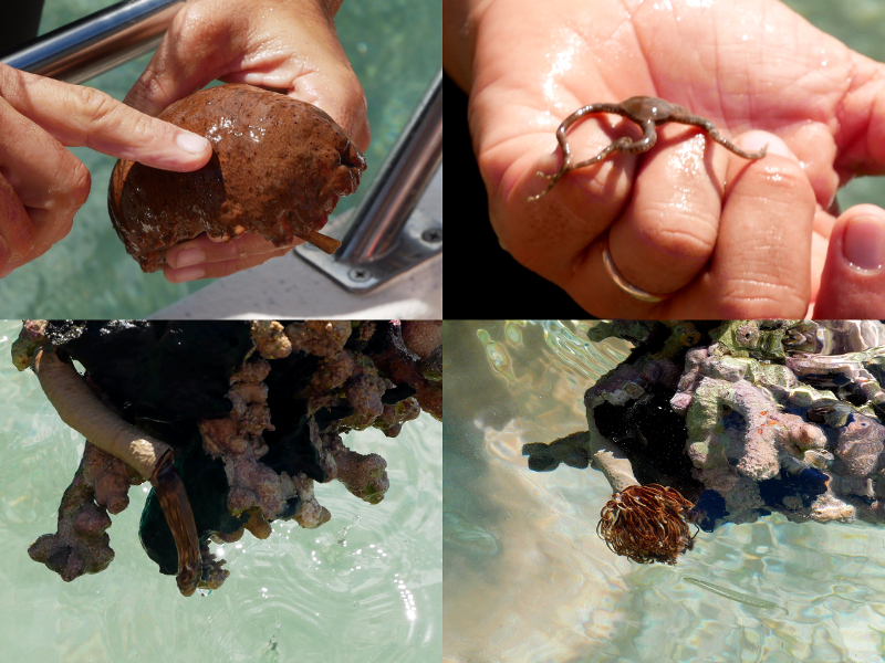 tiere der mangroven guadeloupe