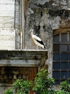 Algarve Faro Storch