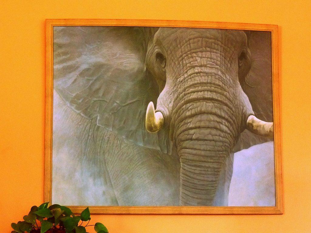 Elephant-house-edinburgh