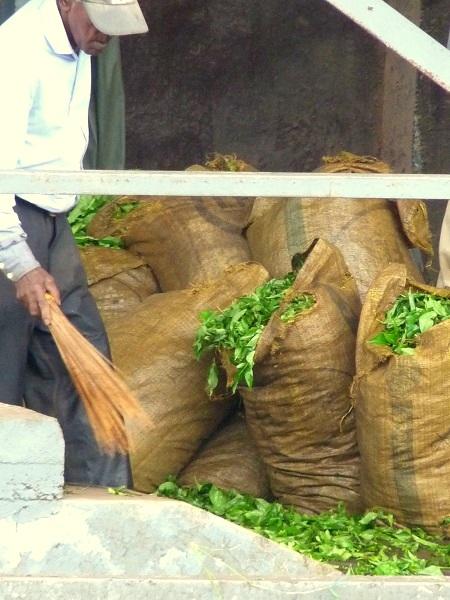 Auf der Teeplantage - Bois Cheri 11