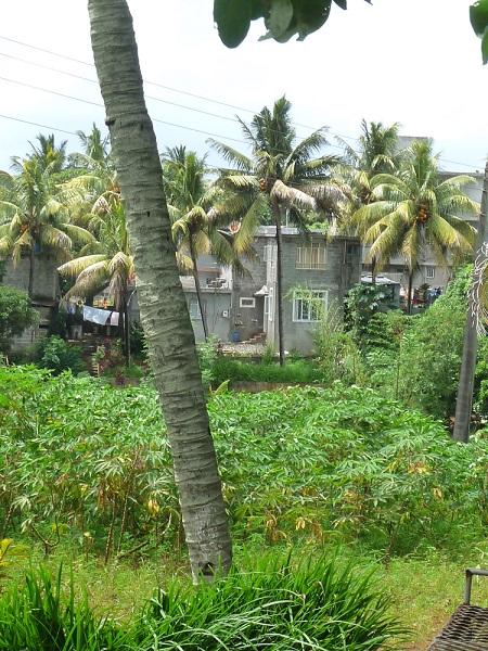 Maniok Biscuiterie Rault Mauritius