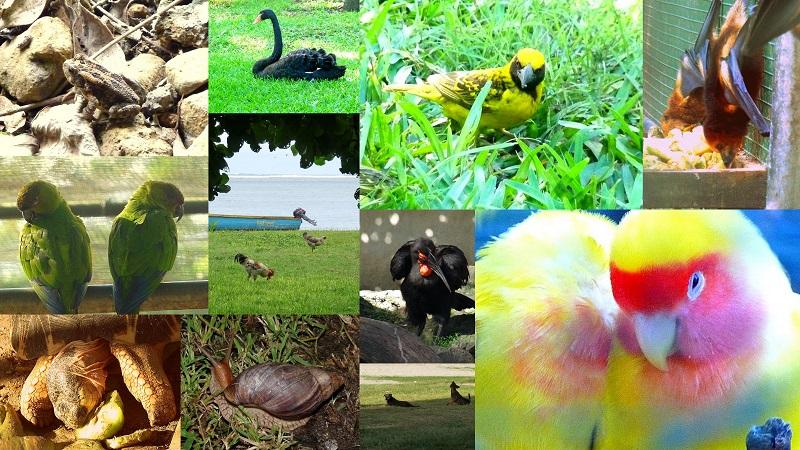 mauritius fauna