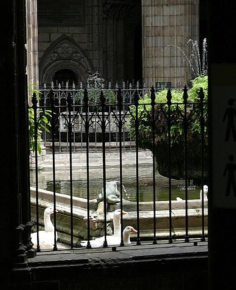 Gänse Kathedrale Barcelona   secrets de barcelona