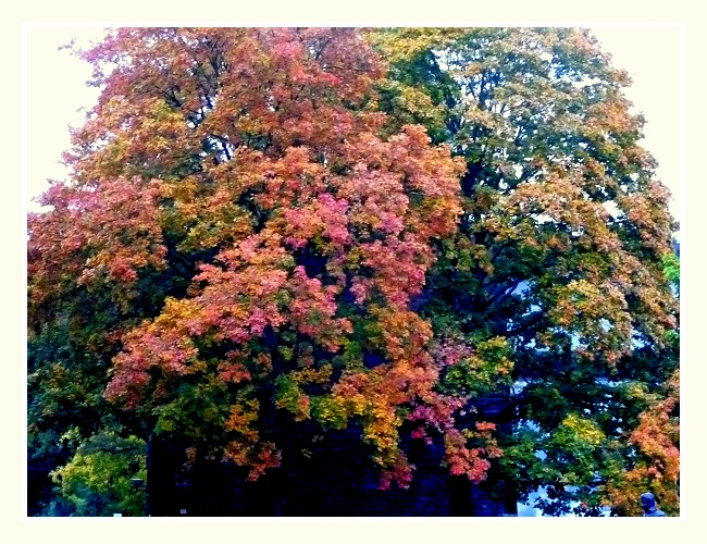 Herbst in Koblenz