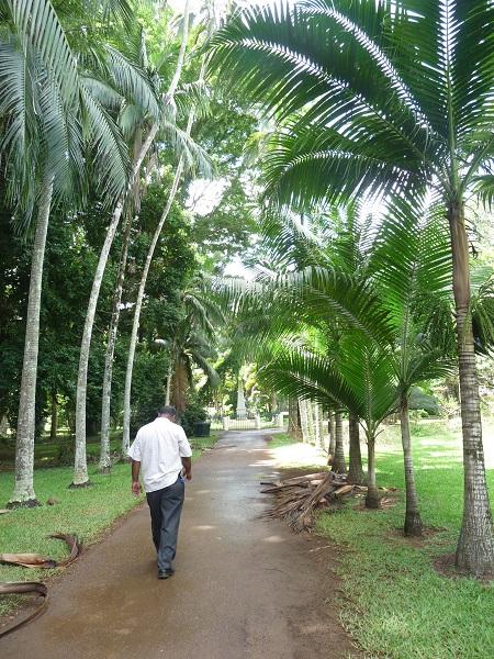 Palmengarten Pamplemousses Mauritius-13