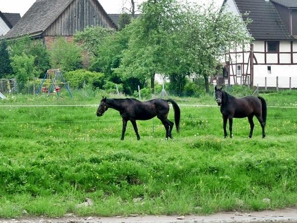 Weser Weserbergland Pferde