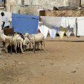 Isla Gorée, la isla de esclavos - un mito? 5