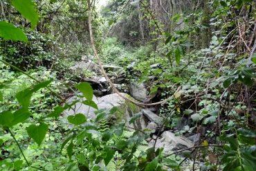 Ein kleiner Urwald vor der Haustür: Wandern im Montseny 1