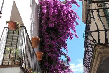 Cadaqués - ein mediterranes Bilderbuch 22