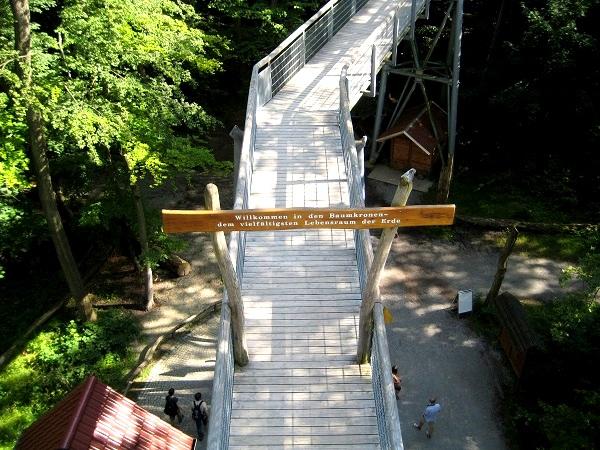 Hainich Baumkronenpfad Welterbe Naturpark