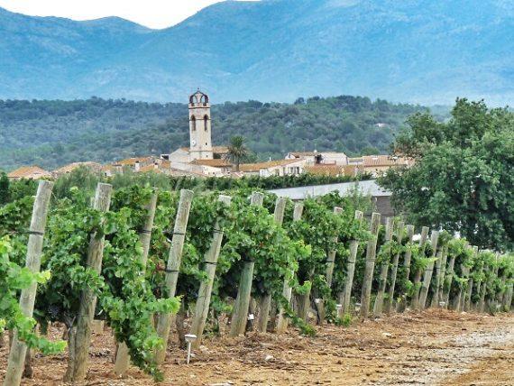 Leckere Weine aus dem Empordà - La Vinyeta 4