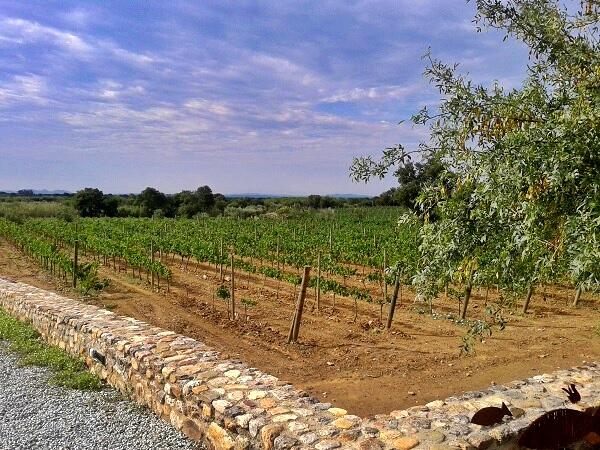 Weinstock La vinyeta costa Brava