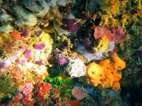 Tauchspots Costa Brava Schwämme und korallen