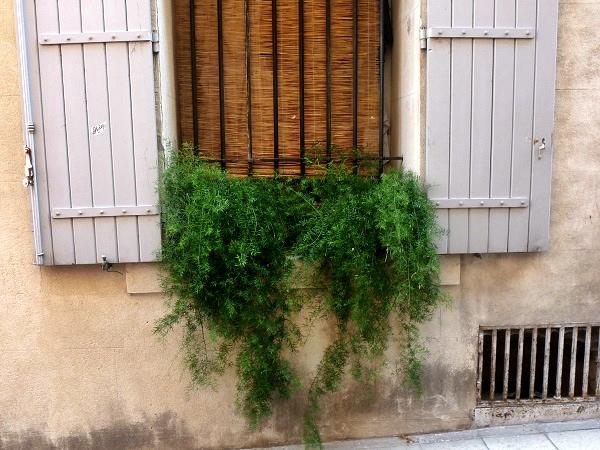 Arles Provence Fenster grün