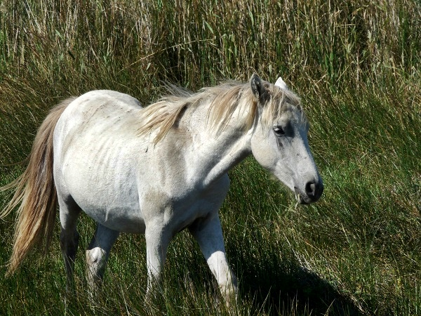 Camargue Pferde Provence