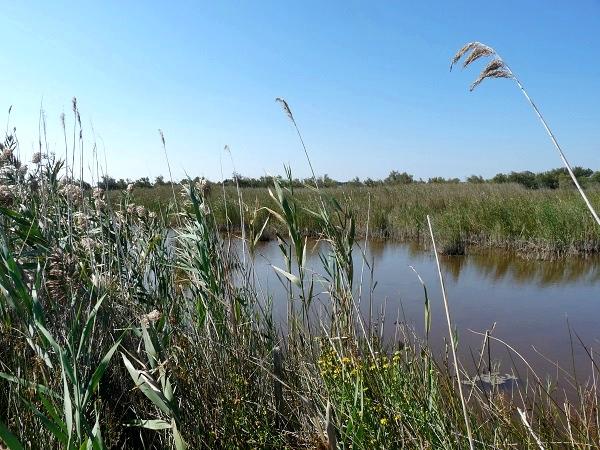 Camargue Rhone Delta