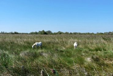 In der Camargue 1