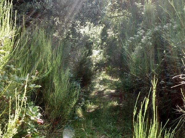 Naturpark Montseny Wandern