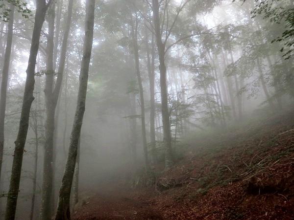 Montseny Wald Katalonien Gorg Negre