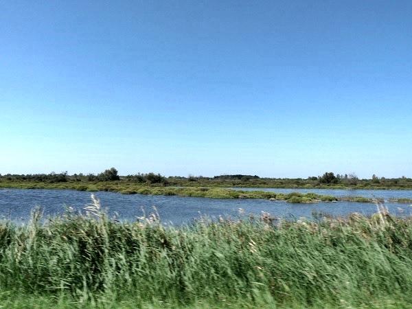 Rhone Delta Camargue