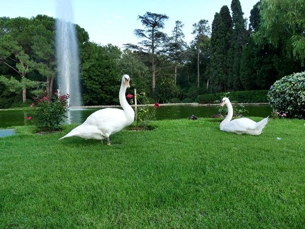 Schwäne im Park Castell Peralada