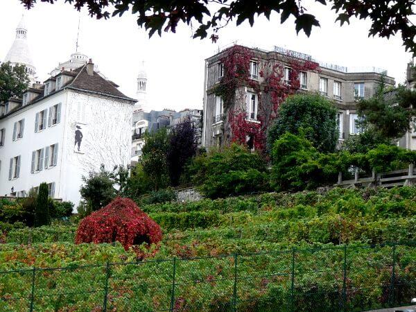 Monmartre Weinlese Paris Weinberg