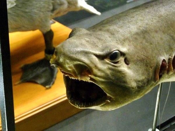 Fisch Museu blau Barcelona