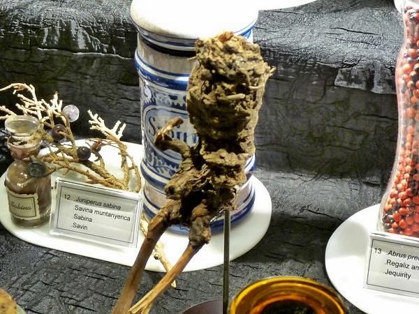 Giftig Alraune Wurzel Mandragora Museu blau