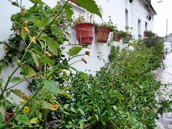 Griechenland Pelion Makrinitsa Herbst