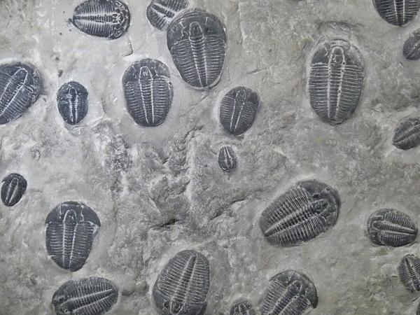 Museu blau Barcelona Fossilien