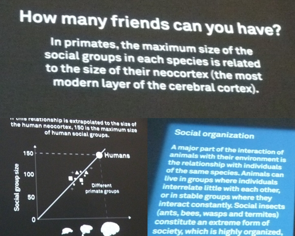 Museu Blau soziales verhalten naturkunde