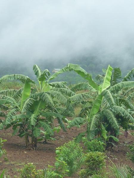Mauritius unterwegs Regenwald