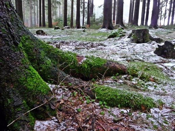 Wurmberg, im Wald Harz Schnee