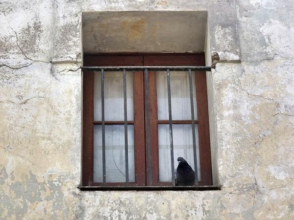 cardedeu window