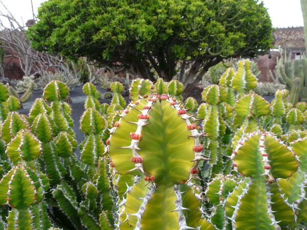 im Kaktusgarten lanzarote