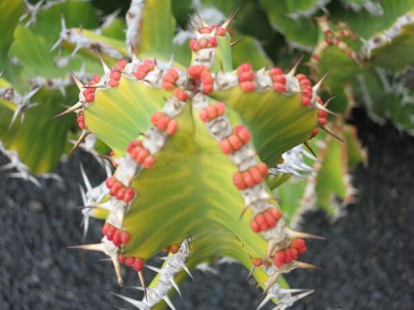 kaktusgarten Lanzarote 2