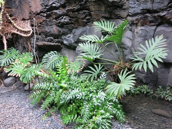 pflanzen Lanzarote Cesar Manrique Fundacion