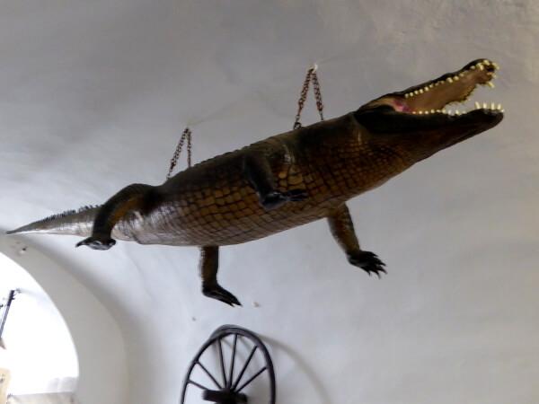 Drache Brno Krokodil