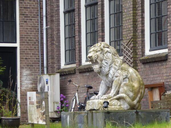 Löwe am Ufer der bootstour