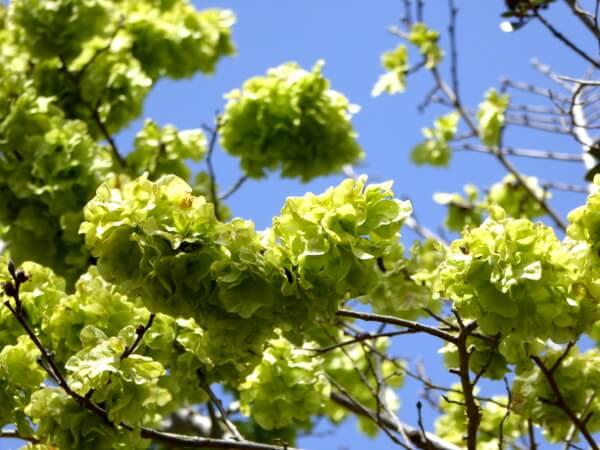 blühende Bäume aiguamolls