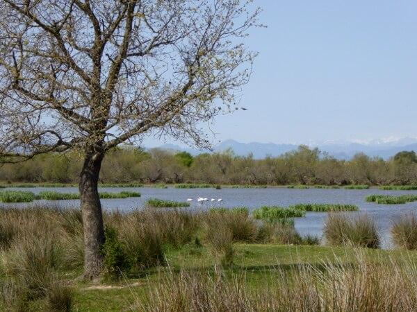 estany vilataut Aiguamolls