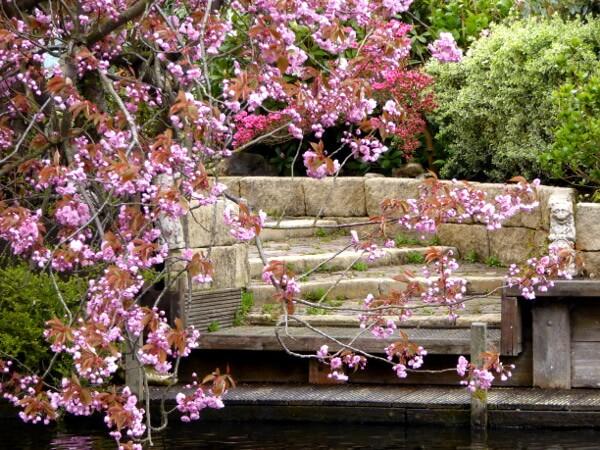 kirschblüten Anlegeplatz unserer bootstour