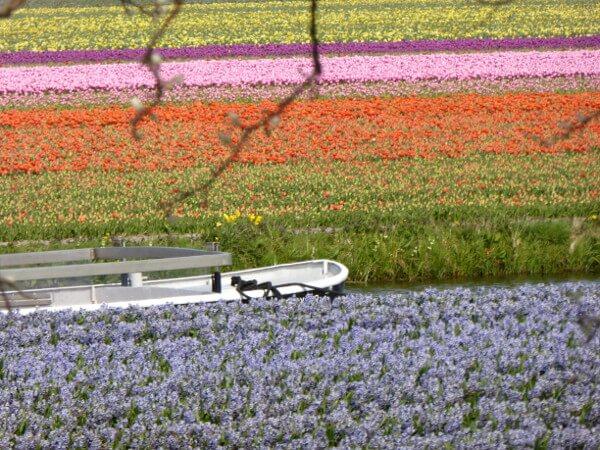 tulpenfelder bootstour