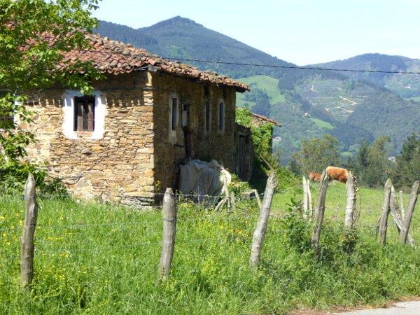 Kühe und Alpenflair im Baskenland Spanien bizkaia